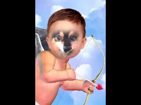 Flying Cupid dog