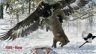 Top 10 Largest and Biggest Eagles In Our World