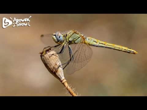 The World Of The Dragonfly - The Secrets Of Nature
