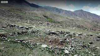 31 жылдан бери изилдөө жүргүзүп келе жаткан окумуштуу - BBC Kyrgyz