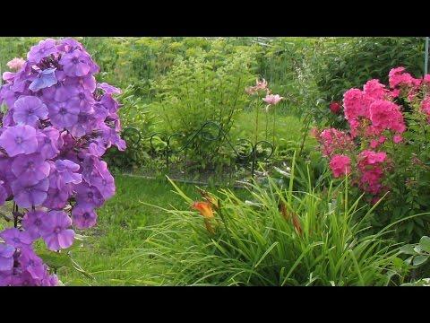 Красивый сад. Декоративные кустарники. Цветы в саду. Флоксы. Лилии. Ромашки. Хвойные деревья.