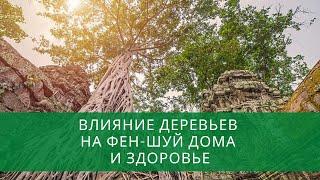 Влияние деревьев на фен-шуй дома и здоровье