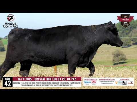 LOTE 42 TE1015 CRYSTAL DON LEO DA RIO DA PAZ - Prod. Agência e TV El Campo