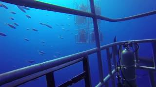 Shark Cage Visit in HD
