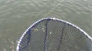 Ловля монстров. Рыбалка в Тайланде.(Ловля монстров. Рыбалка в Тайланде., 2012-07-08T13:16:08.000Z)