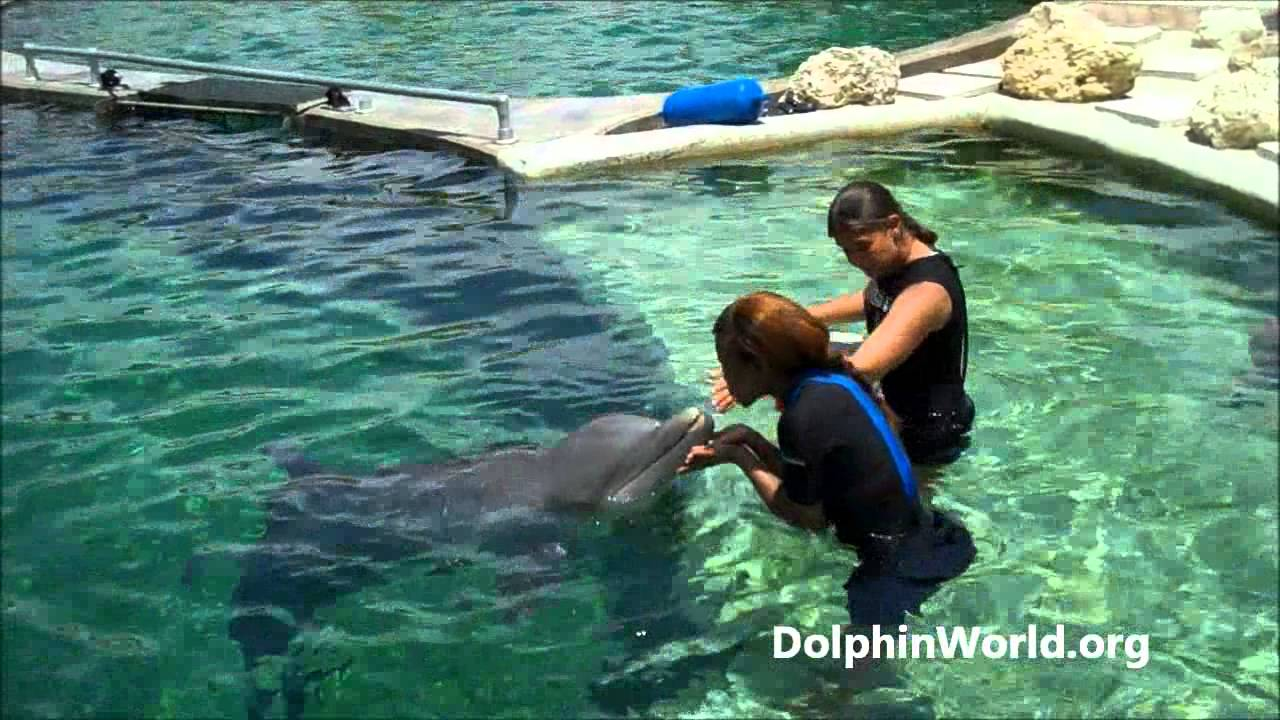 e698c1dd Miami Beach Swim with Dolphin Tour