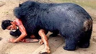 Wenn Schwarzbären angreifen