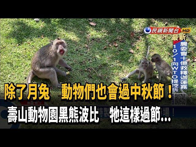 """動物園慶中秋! 黑熊愛上柚子""""外帶""""回窩吃-民視台語新聞"""