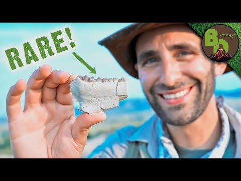 Fossil Hunting in the BADLANDS!