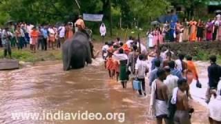 Bavali River, Kannur, Kerala, India, elephant, festival, ritualistic procession, Kottiyoor