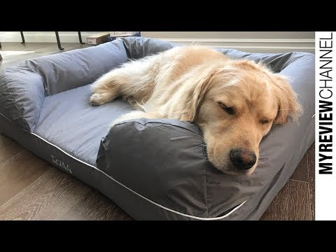 best-beds-for-dog-review-2019