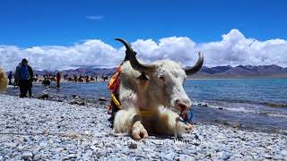 This is Tibet: The Sacred Lake in My Heart