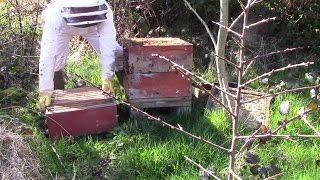 First Spring Inspection Of Bees In Rose Hives