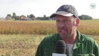TV: Zorgen over uitbraak Afrikaanse varkenspest