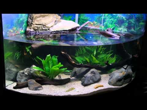 My Turtle Tank Habitat/ Setup Three Years Later! Featuring 2 Northern ...