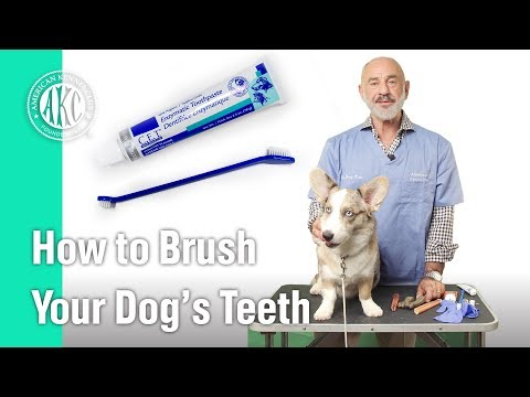 How to Brush your dog's teeth - AKC Vet's Corner