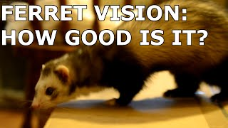 Ferret Vision: How Good is it?
