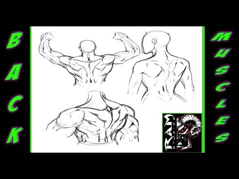 Drawing Anatomy - Study of the human back muscles - Narrated