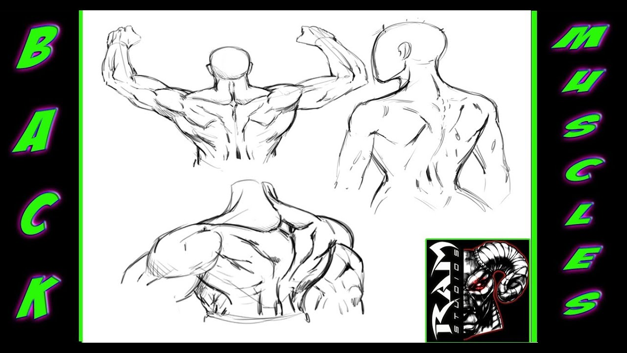 Drawing Anatomy - Study of the human back muscles ...