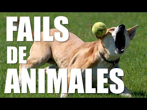 Los Mejores Fails de Animales | Leo L.A
