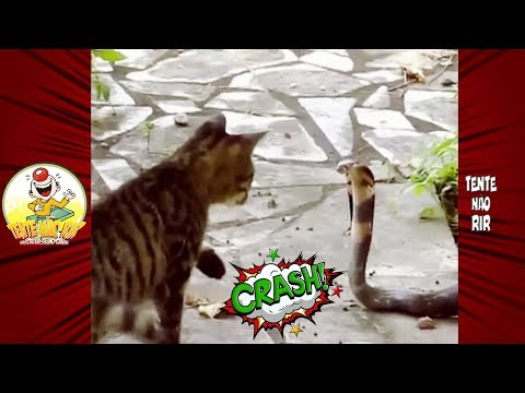 Videos Engraçados de Gatos 2018 | Funny Cat Fails Compilation