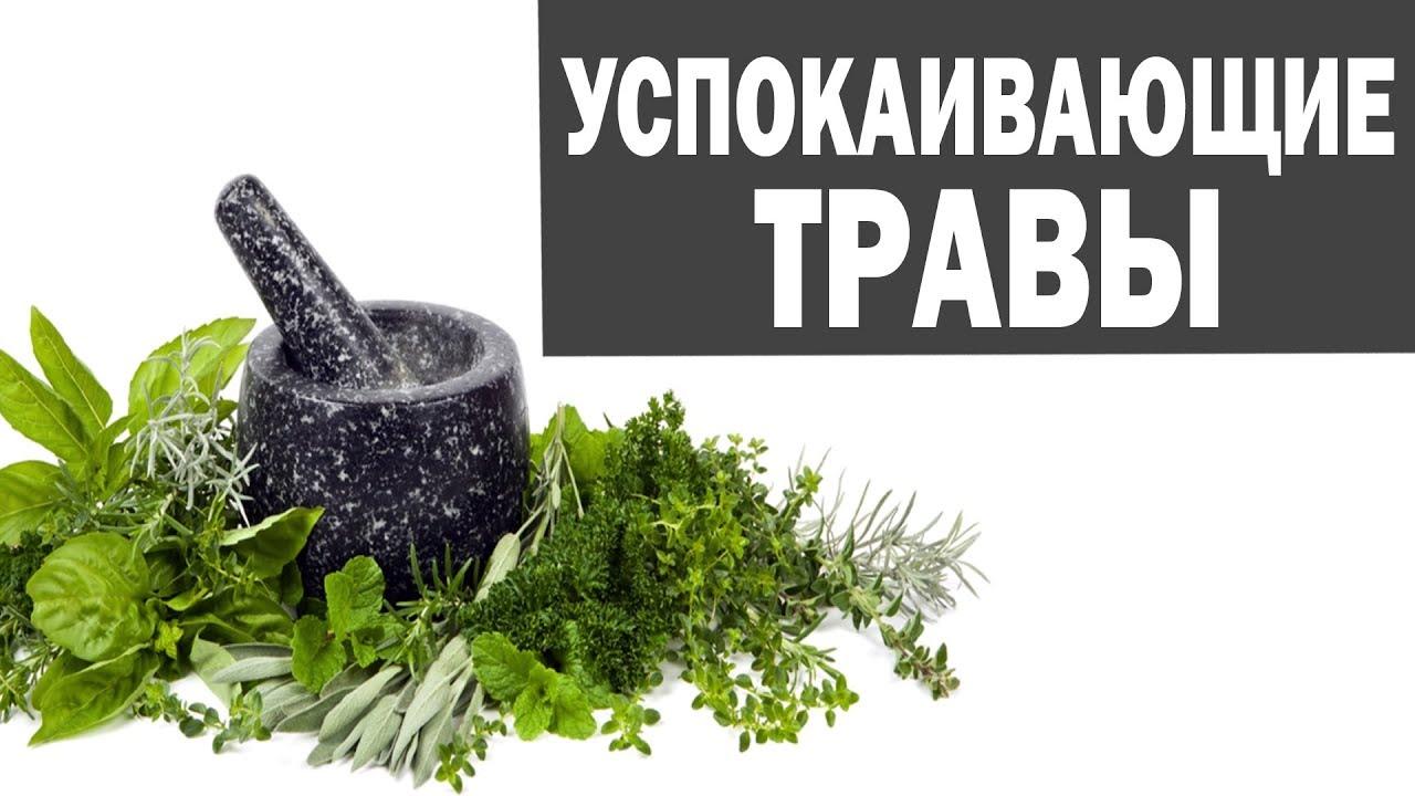 Сабельник болотный - Русский Женьшень - YouTube