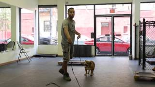 (episode:7) Dctk9's Dog Behavior Question Tuesday