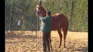 caballos doma vaquera los primeros pasos .avi