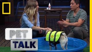 Doggie Swimming Tips | Pet Talk