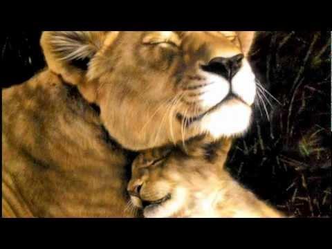 Нежность...С любовью к миру животных....