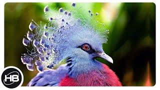 10 Шикарных Птиц c Коронами
