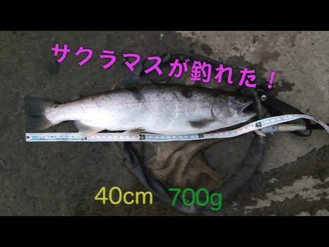 40cm������������������� ���������trout