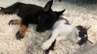 meet-luna-our-german-shepherd-puppy