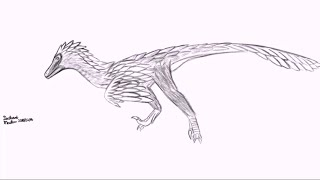 How to draw Velociraptor