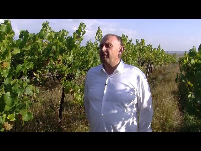 Naturweingarten