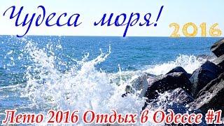 МЕДУЗЫ, МИДИИ и РЫБА ИГЛА | ОТДЫХ В ОДЕССЕ 2016 ЛЕТО НА МОРЕ | Влог SkyVlad(ОТДЫХ В ОДЕССЕ 2016 Лето на море | Медузы, мидии и рыба игла в Чёрном море | Влог SkyVlad ▷ ПОДПИСЫВАЙТЕСЬ, НЕ ПРОПУ..., 2016-07-19T07:53:01.000Z)