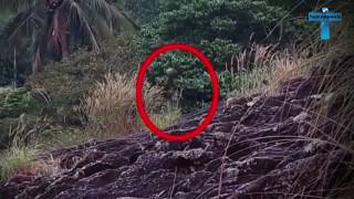 Top 10 Mysterious Creatures Caught On Camera  Unbelievable Scary Creatures On Videos