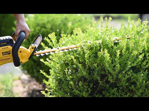 How to trim round boxwoods | First time using Dewalt 20v Hedge Trimmer | 🌾🍹 Soil + Margaritas