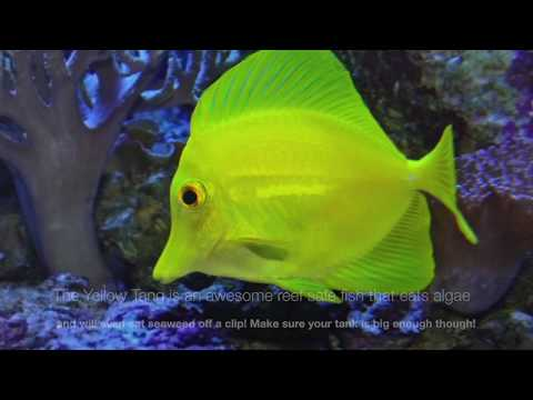 Top 10 Best Saltwater Fish For Beginners
