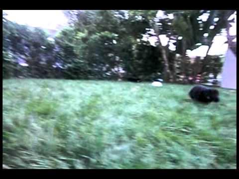 Robin Atkin Downes - Meet The Pups