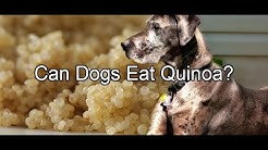 Can Dogs Eat Quinoa?