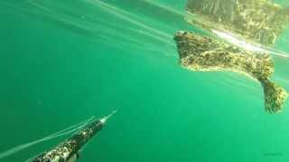Поиск плоской рыбы.Черное море.GoPro2.(Камбала калкан.Осень 2013 Черное море., 2013-12-27T17:56:31.000Z)