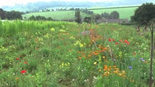 Organic Vegetable Farming with Shillingford Organics