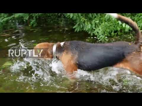 USA: Watch dramatic rescue of trapped dogs in Florence-hit North Carolina