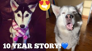 The Full 10 Year Story Of Millie The Husky Becoming The Best Husky Ever! [UNSEEN PUPPY CLIPS!!!]