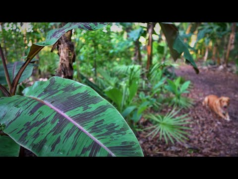 Subtropical Food Forest Tour: Back To Life After Frost Damage @ Sandhill Farm