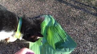 Пробуем с моей кошкой Тайский десерт Рис вареный в кокосовом молоке с яичным пудингом в листе банана