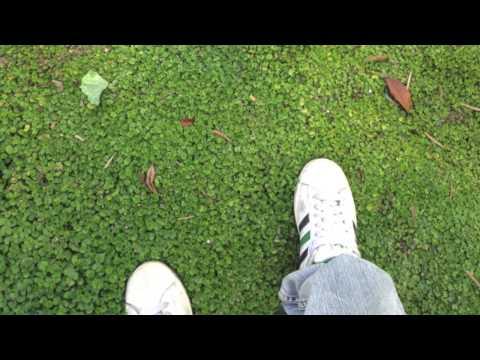 Down By The Salley Gardens - Nina Huang & Ishana L.