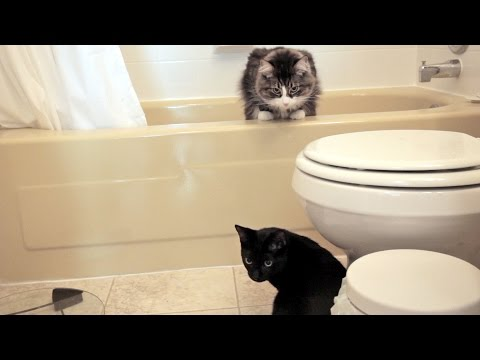 N2 the Talking Cat S4 Ep8 - Hide and Seek
