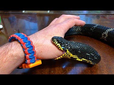 Змея ест… человека. Кормление змей (Snake Eating... Man. Feeding The Snakes)